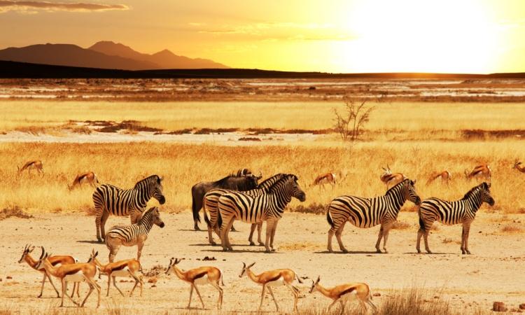 12.1 Namibia